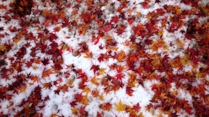 紅葉回廊 雪の上