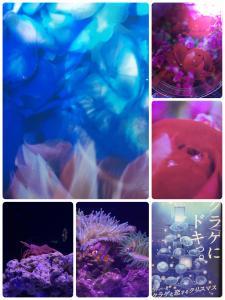 fc2blog_20161213192659c60.jpg
