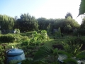 East Bay Allotments