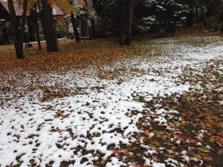 2016年初雪と紅葉2 in旭川