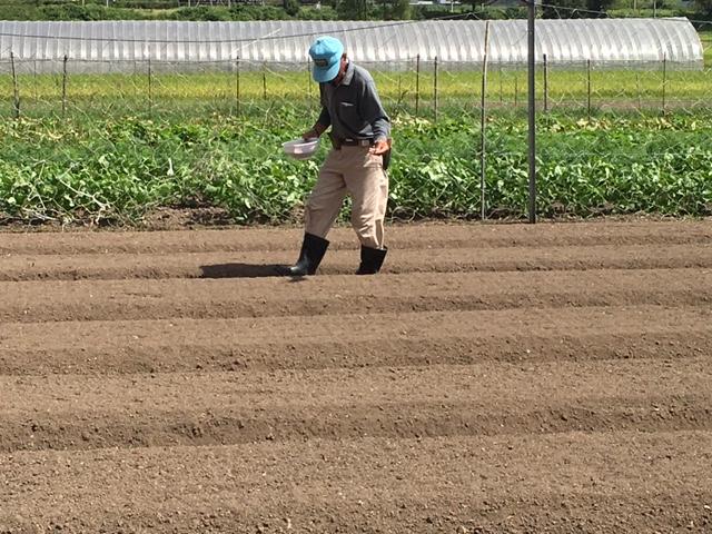 蕎麦播種1