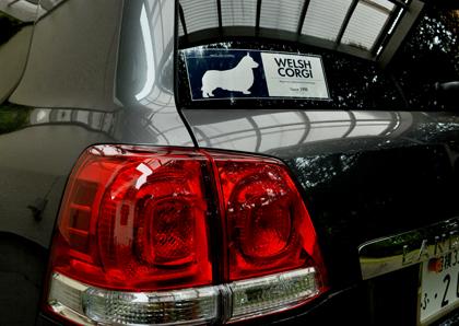1604洗車