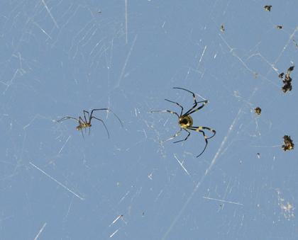 16女郎蜘蛛