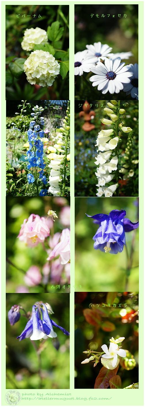 g5-garden.jpg