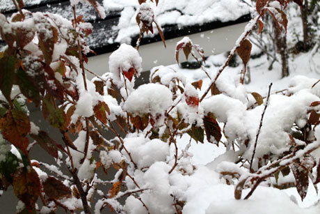 雪がふりまして