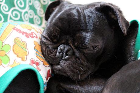 貫吉の寝顔
