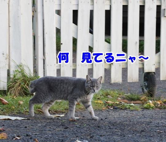 DS7A1887.jpg