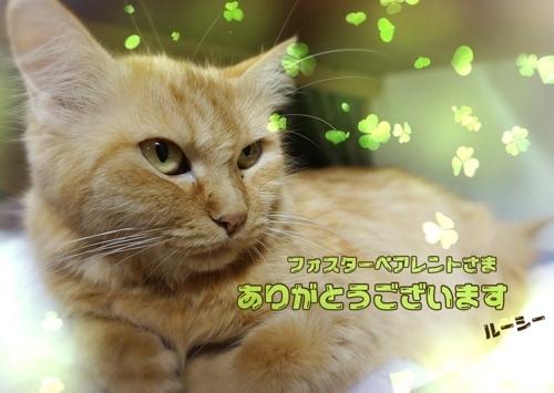 fc2blog_20161210010956107.jpg