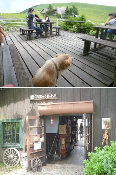 コロボックル小屋