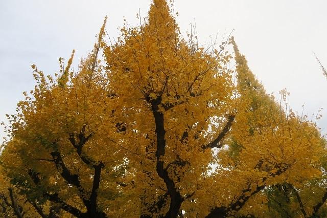 2016神宮外苑の紅葉(2)