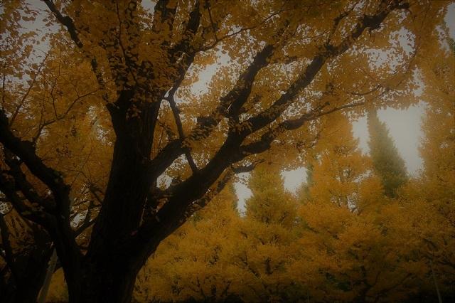 2016神宮外苑の紅葉(3)