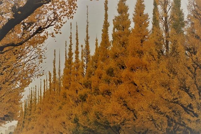 2016神宮外苑の紅葉(6)