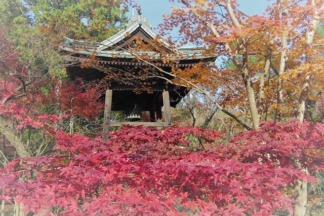 2016平林寺 鐘と紅葉(1)