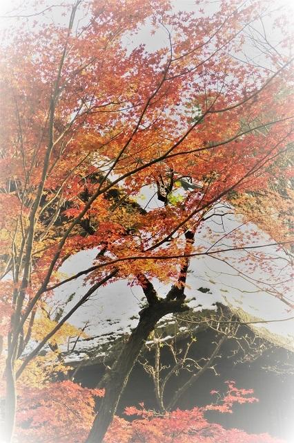 2016平林寺 かやぶき屋根の小屋と紅葉