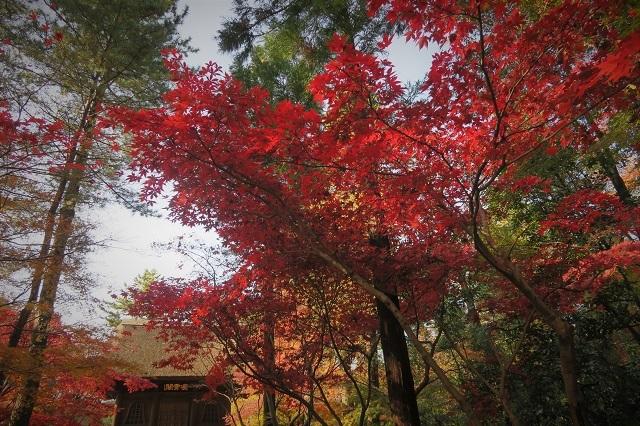 2016平林寺の山門と紅葉(1)