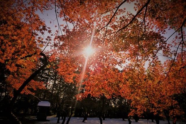2016平林寺の雪と紅葉(2)