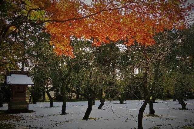 2016平林寺の雪と紅葉(3)