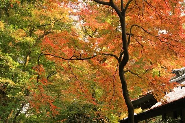 2016 平林寺の紅葉(2)