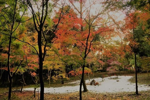 2016 平林寺の紅葉(3)