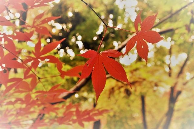 2016 平林寺の紅葉(4)