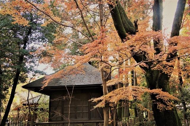 2016 平林寺の紅葉(10)