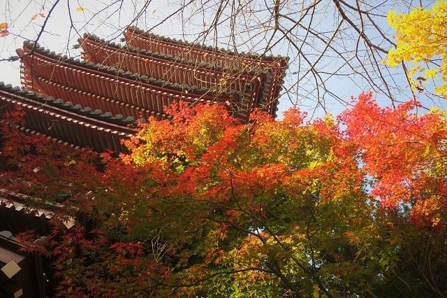 2016松戸・本土寺の紅葉(2)