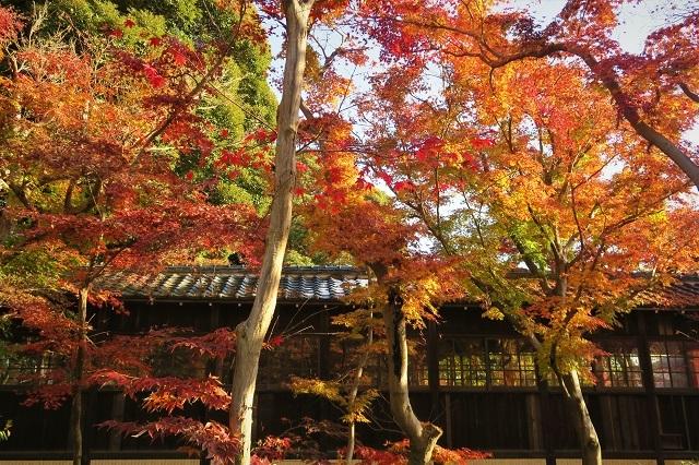 2016松戸・本土寺の紅葉(4)