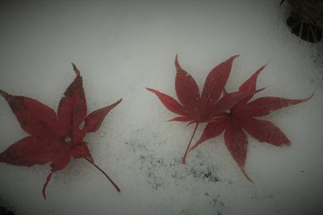 2016松戸・本土寺の紅葉(6)