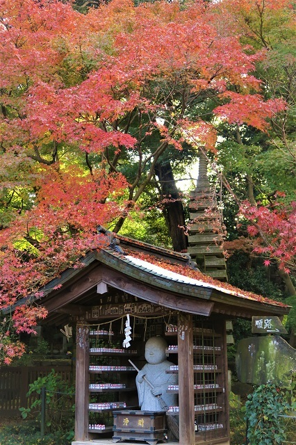 2016松戸・本土寺の紅葉(11)