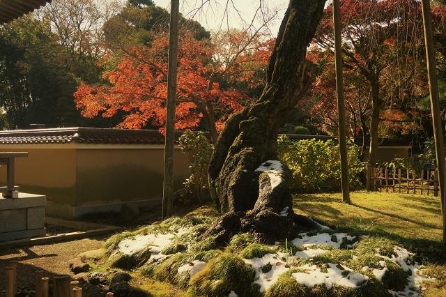 2016松戸・東漸寺の紅葉(9)