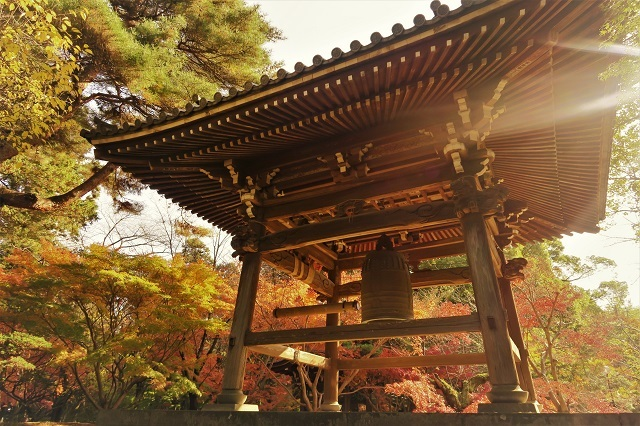 2016松戸・東漸寺の紅葉(10)