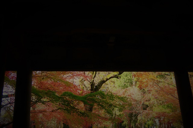 2016松戸・東漸寺の紅葉(2)