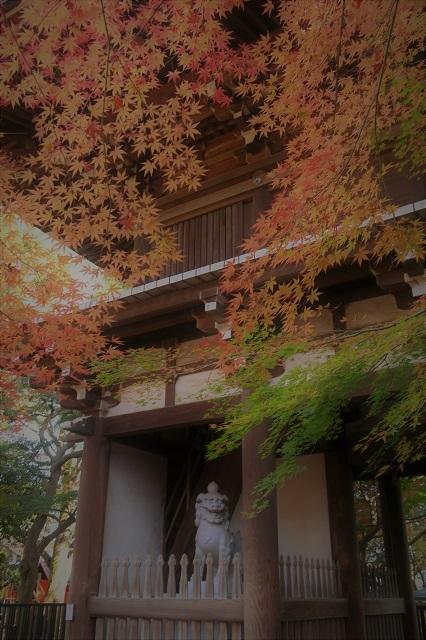 2016松戸・東漸寺の紅葉(3)