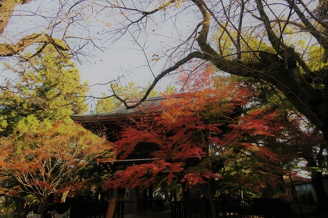 2016松戸・東漸寺の紅葉(4)