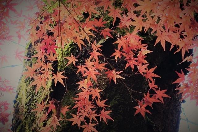 2016松戸・東漸寺の紅葉(6)