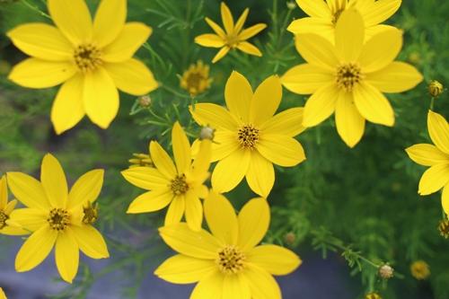 flower-20160612.jpg