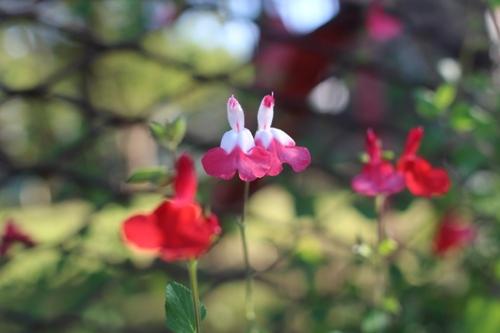 flower-20161002.jpg