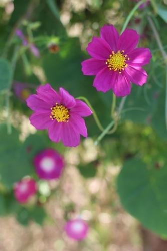 flower-20161015.jpg