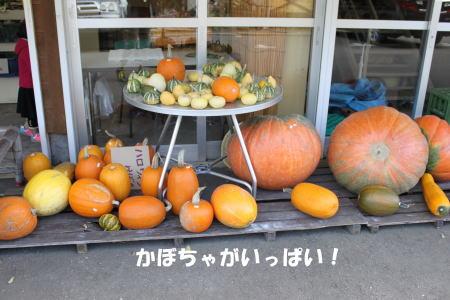 2016-10_25_11.jpg