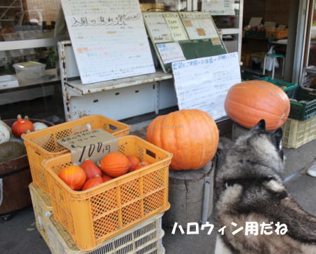 2016-10_25_12.jpg
