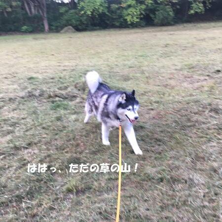 2016-10_27_4.jpg
