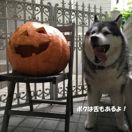 2016-10_28_3.jpg