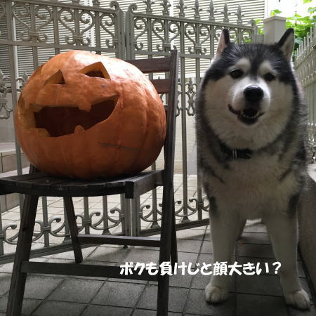 2016-10_28_4.jpg