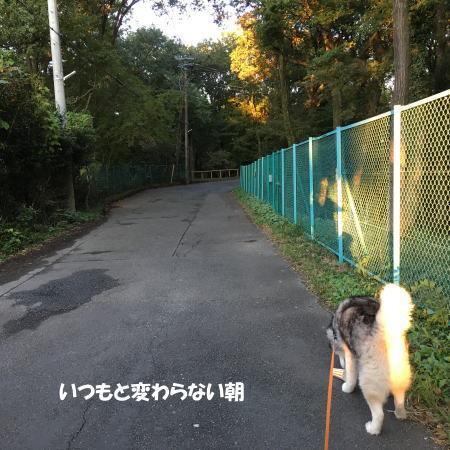 2016-11_04_6.jpg