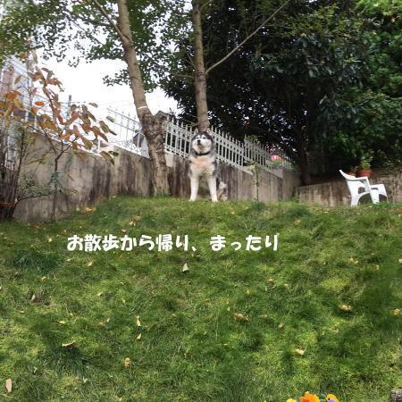 2016-11_10_5.jpg