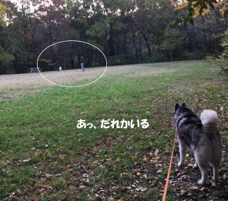 2016-11_17_5.jpg