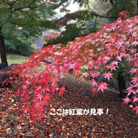 2016-11_22_4.jpg