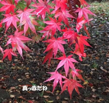 2016-11_22_5.jpg