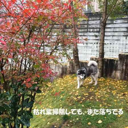2016-11_22_7.jpg