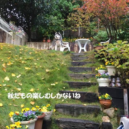 2016-11_22_8.jpg